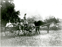 Photograph of two men and a girl riding on a cart pulled by a horse on the Mudge farm in Grantfork