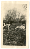 Photograph of two dogs outdoors on the Mudge farm in Grantfork